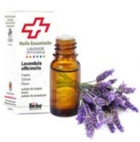 Illustration Huile Essentielle Lavande officinale - 10 ml