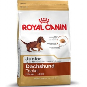Illustration Croquettes Royal Canin - Breed - Teckel Junior 1.5 kg